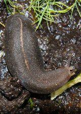 slug..