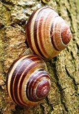 snail-.
